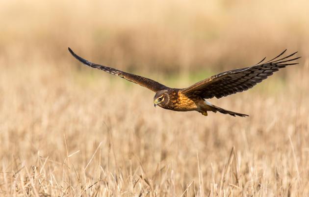 National Audubon Society Resources