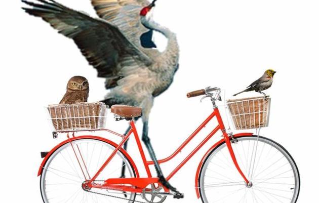 Birds n' Bikes