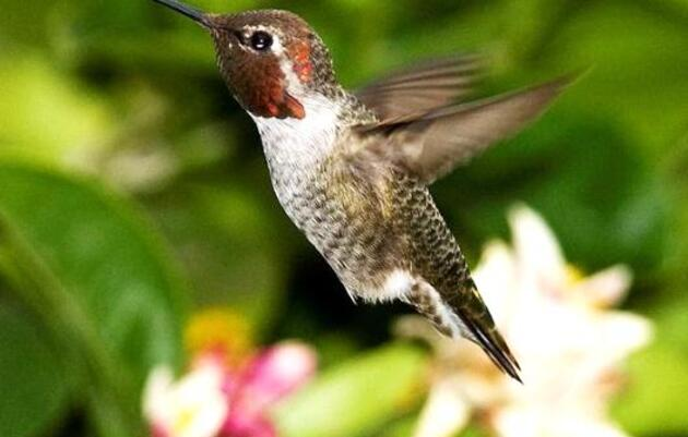 Fun Facts about hummingbirds