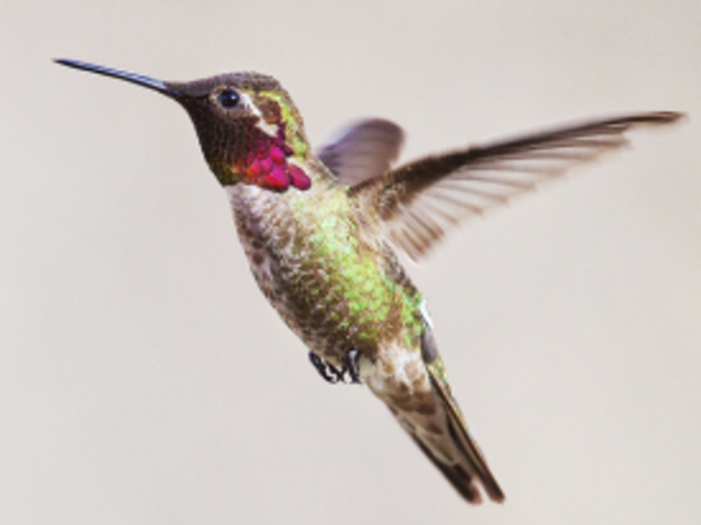 Which birds can you attract to your yard?