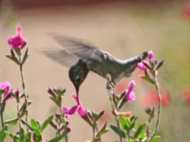 Plants that Attract Hummingbirds