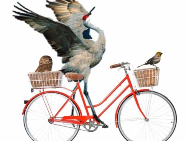 Birds and Bikes
