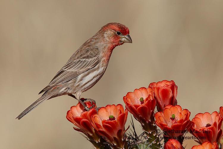 Backyard birding | Rio Salado Audubon Center