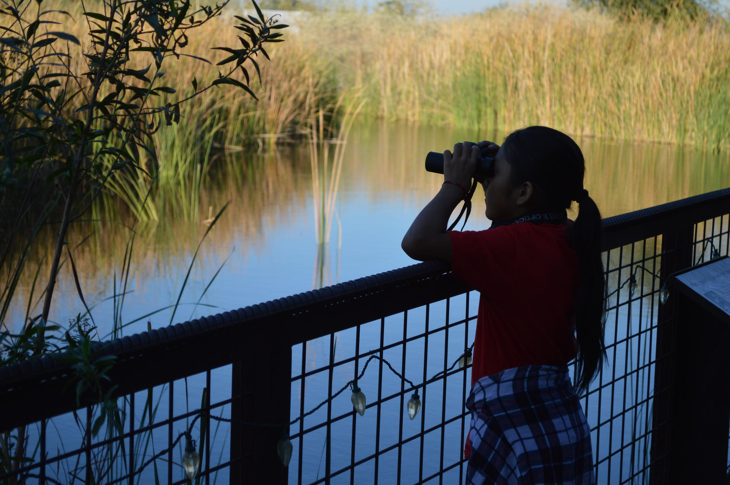 A girl looks out with binoculars over the pond.