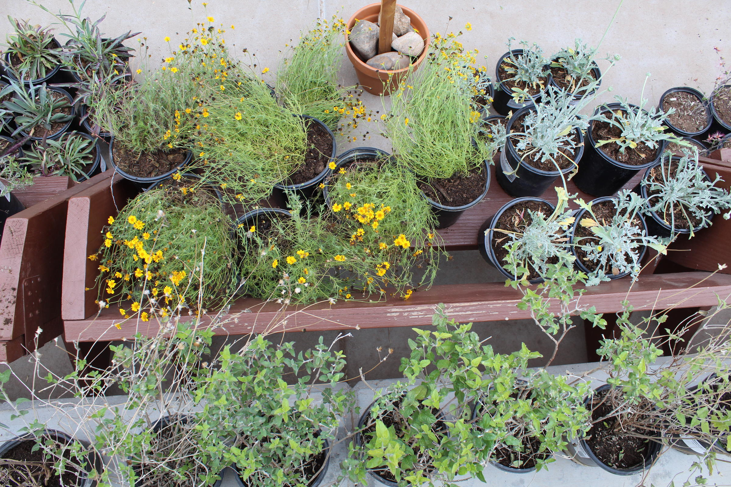 A scene of native plants for sale.