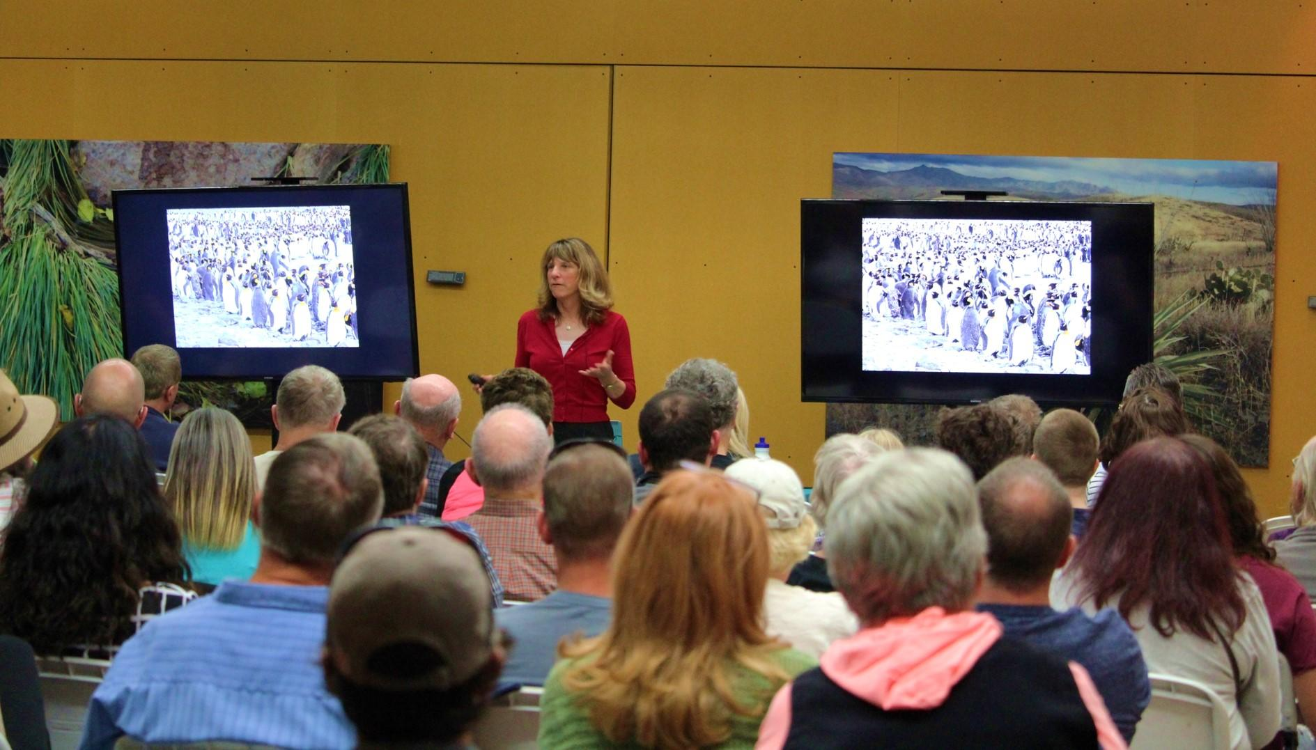 A crowd of people watch Cindy Marple talk about penguins with a picture of penguins on two TV screens.